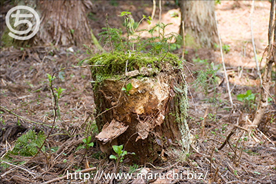写真素材森の中の地面