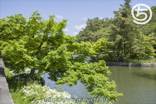 悠久山公園 2017年五月
