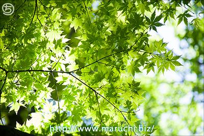 まるちimage+2016年6月撮影 木の葉