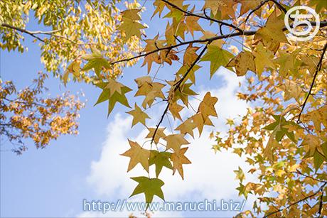 まるちimage写真素材 2016年十月枯れ葉