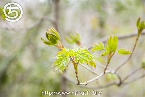 春の里山 新芽 国営越後丘陵公園2018年四月