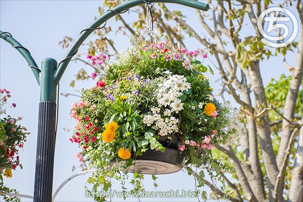 まるちimage写真花プランター