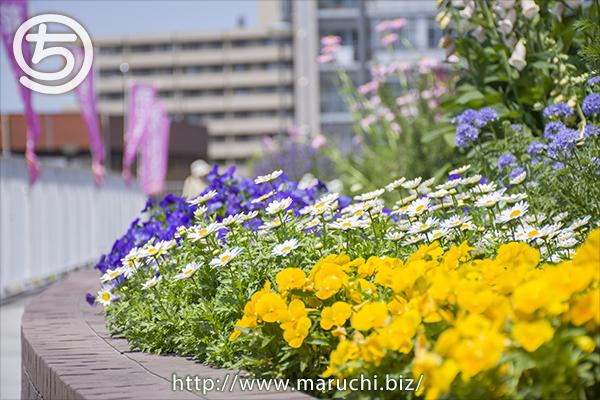 長岡市民防災公園の花 2019年五月