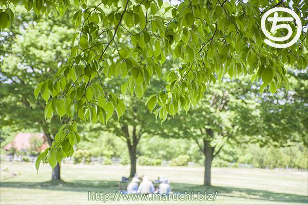 長岡市東山ふれあい農業公園2019年五月