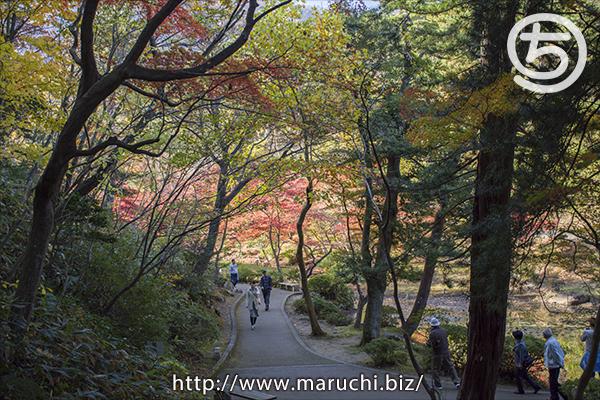 弥彦公園もみじ谷2019年十一月